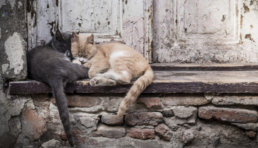 11 FACTS ABOUT ANIMAL HOMELESSNESS